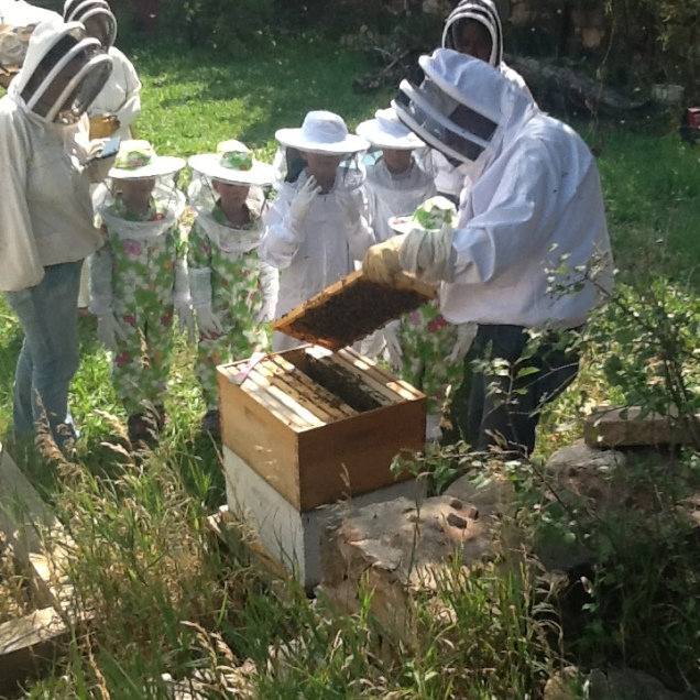 Learning about bees!