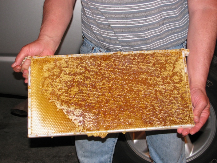Honey Ready for Extracting